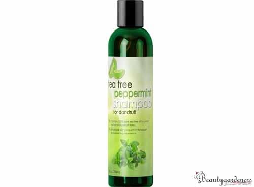 smelly scalp shampoo